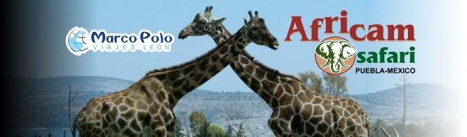 Africam Safari en 2015