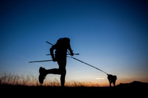 dreamstime_dogtrekker_evening